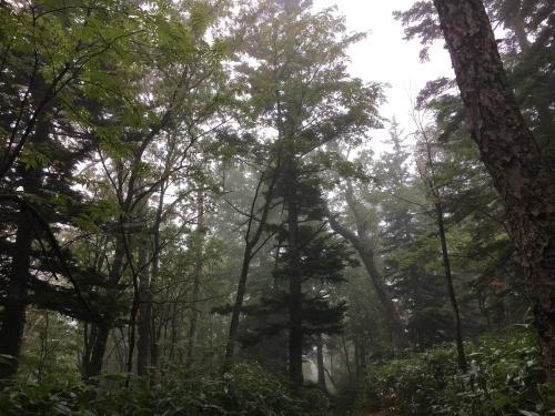 雨が多いね。_e0326953_10240546.jpg