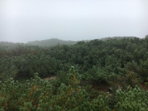 雨が多いね。_e0326953_10263589.jpg