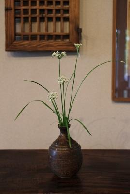 花だより 韮の花_a0279848_17161088.jpg