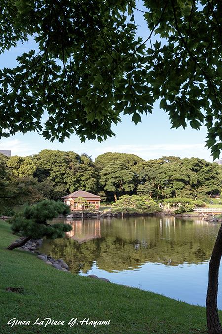 東京の風景 夏の浜離宮恩賜庭園_b0133053_00261007.jpg