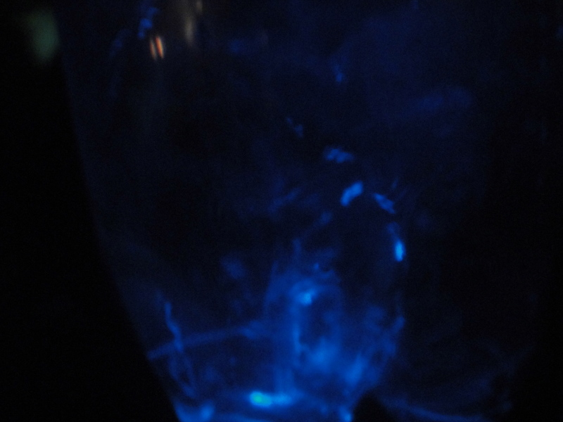 夏のおわりの神秘体験『ウミホタルウオッチング』・・・せんなん里海公園_c0108460_00173878.jpg