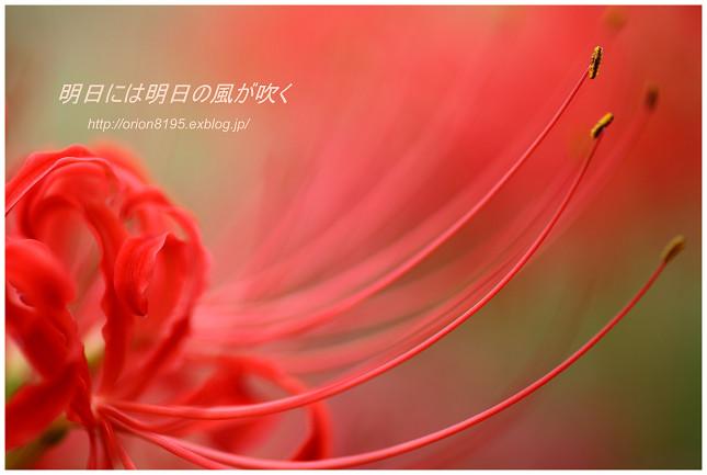 f0361079_138353.jpg
