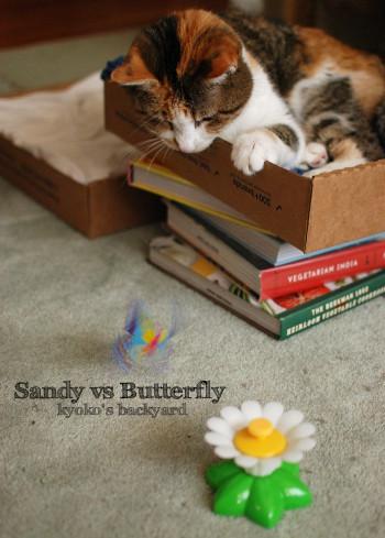 Sandy vs くるくるバタフライ_b0253205_06072963.jpg