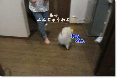 b0167519_20361396.jpg