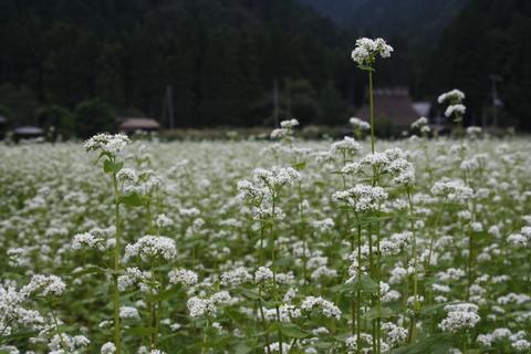 9月12日 蕎麦を食べに美山へ_a0023466_15551476.jpg