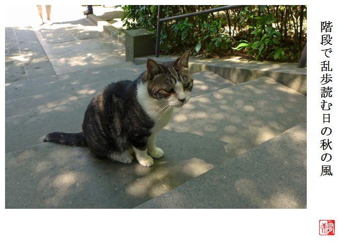 猫にさわりたい_a0248481_2334973.jpg