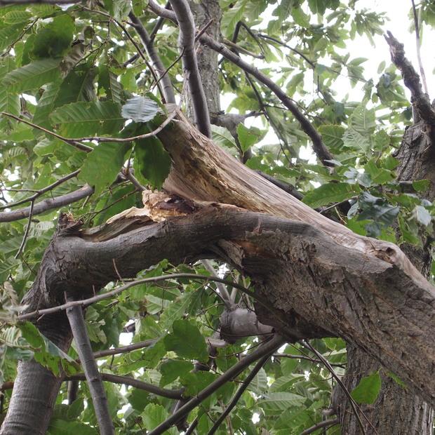 街路樹の被害_a0292194_17132388.jpg
