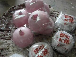 息子が写した桜(^^)_f0374160_17181936.jpg