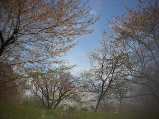 息子が写した桜(^^)_f0374160_17181952.jpg