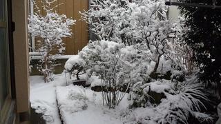 雪が積もりました~_f0374160_17213420.jpg