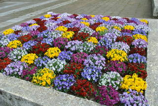 お花見に行ってきました~♪_f0374160_17221246.jpg