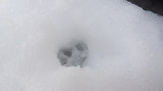 雪遊び(='x'=)_f0374160_17253315.jpg