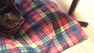 枕カバー♪_f0374160_17254488.jpg