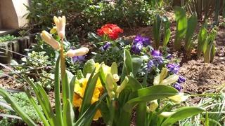春が来た♪_f0374160_17260041.jpg
