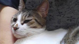 ネコのチャームを使って♪_f0374160_17315675.jpg