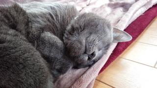 ネコの日ばんざ~い♪_f0374160_17331738.jpg