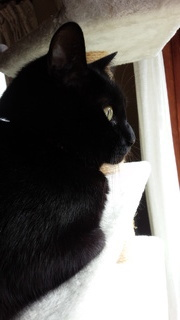 ネコの日ばんざ~い♪_f0374160_17331778.jpg