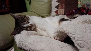 ネコの日ばんざ~い♪_f0374160_17331779.jpg