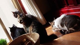 ネコの日ばんざ~い♪_f0374160_17331781.jpg