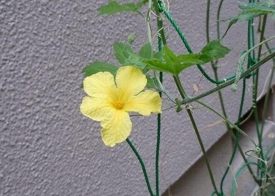九月の花、九月の歌 (4) ~ Maybe September ~ _b0102572_1651340.jpg