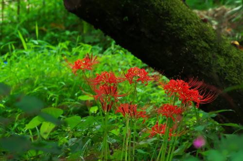花之江の郷の秋の始まり1_a0263109_09410759.jpg