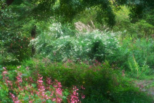 花之江の郷の秋の始まり2_a0263109_09532037.jpg