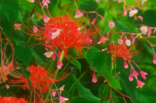 花之江の郷の秋の始まり2_a0263109_09532088.jpg