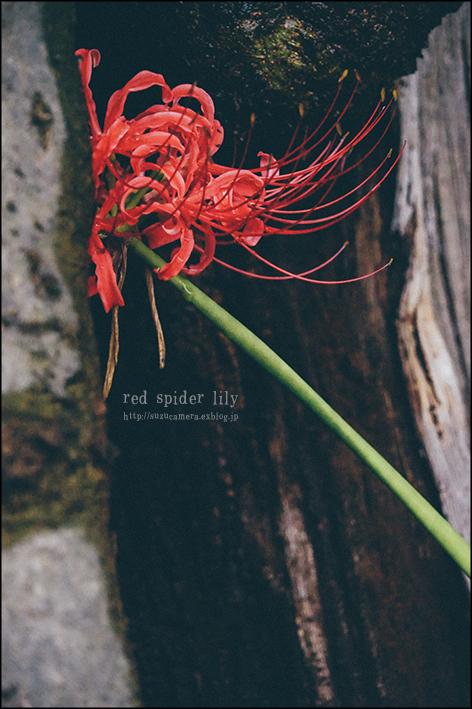 赤い蜘蛛_f0100215_20060050.jpg