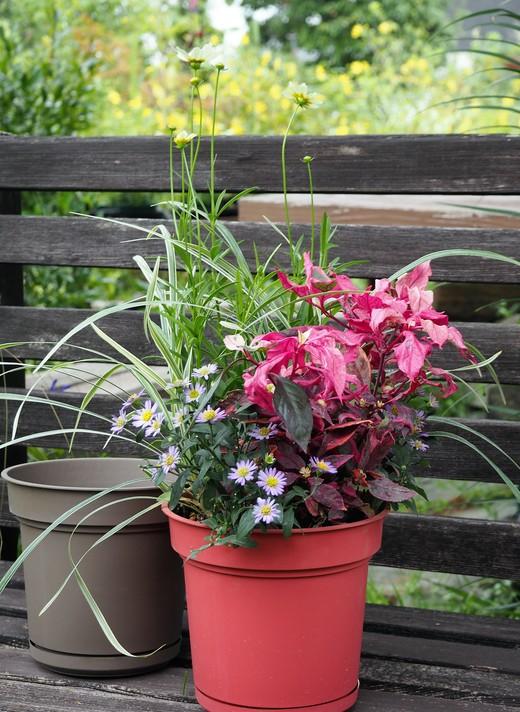 ハイドポットで植物の贈り物!_f0139333_22432753.jpg