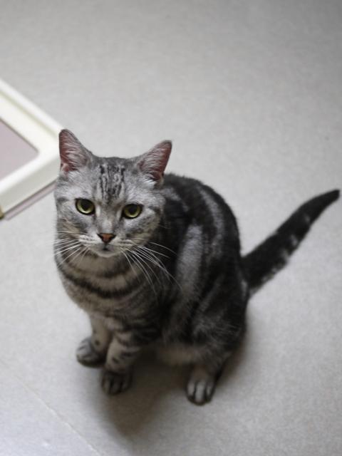 猫のお留守番 サンくんジュンくんクロくんチャチャくん編。_a0143140_21435969.jpg