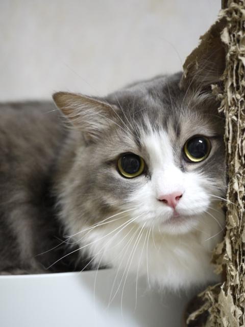 猫のお留守番 サンくんジュンくんクロくんチャチャくん編。_a0143140_21475297.jpg