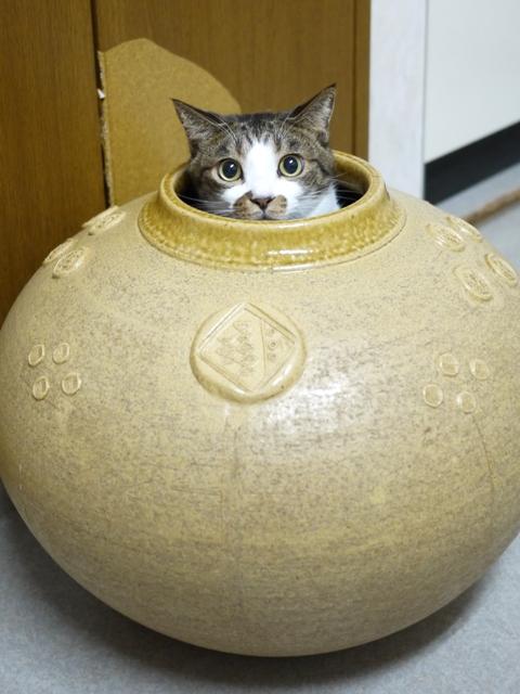 猫のお留守番 サンくんジュンくんクロくんチャチャくん編。_a0143140_21483032.jpg