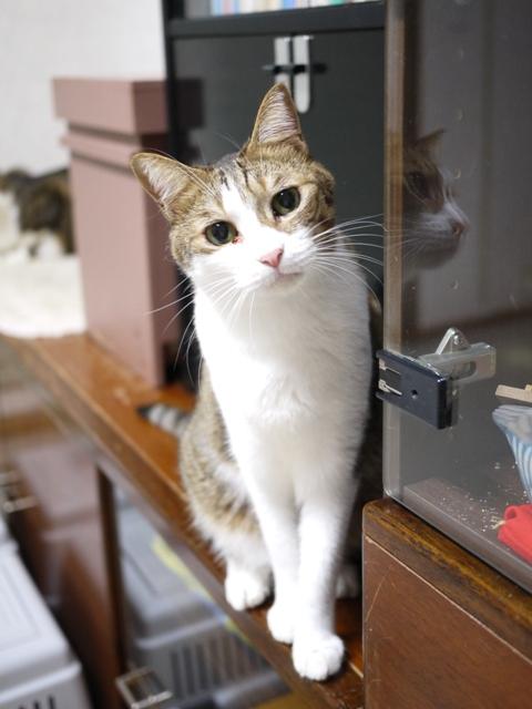 猫のお留守番 サンくんジュンくんクロくんチャチャくん編。_a0143140_21521785.jpg
