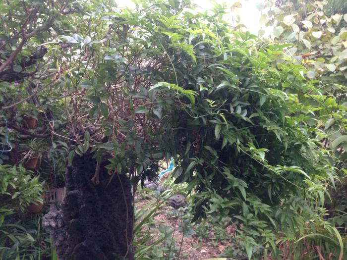 最近の庭_b0087077_09321968.jpg
