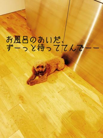 お風呂ウェイト_b0370192_11185940.jpg