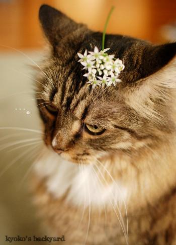 Baileyにニラの花を進呈_b0253205_05320319.jpg