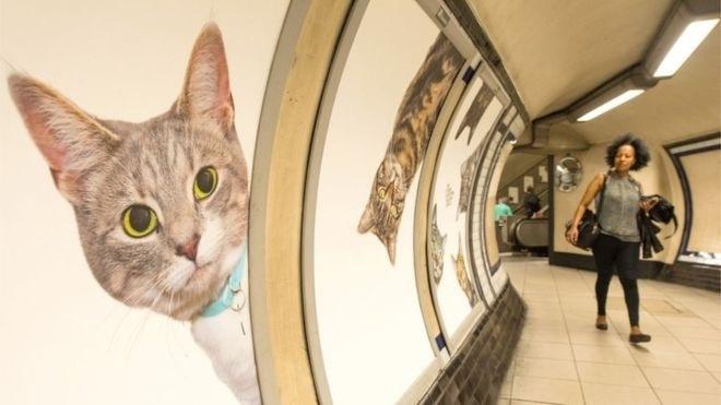 地下鉄クラパムコモン駅が猫に乗っ取られた!?笑_e0114020_01073885.jpg