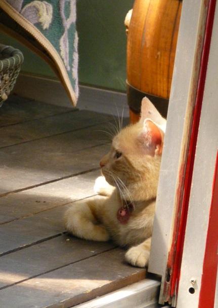 しまなみ海道【尾道-猫の細道、ブーケダルブル】_e0237625_16491784.jpg