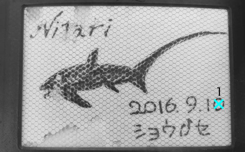 ニタリ☆みなべ・田辺_e0158261_76928.jpg