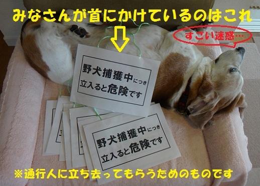 f0121712_16405551.jpg