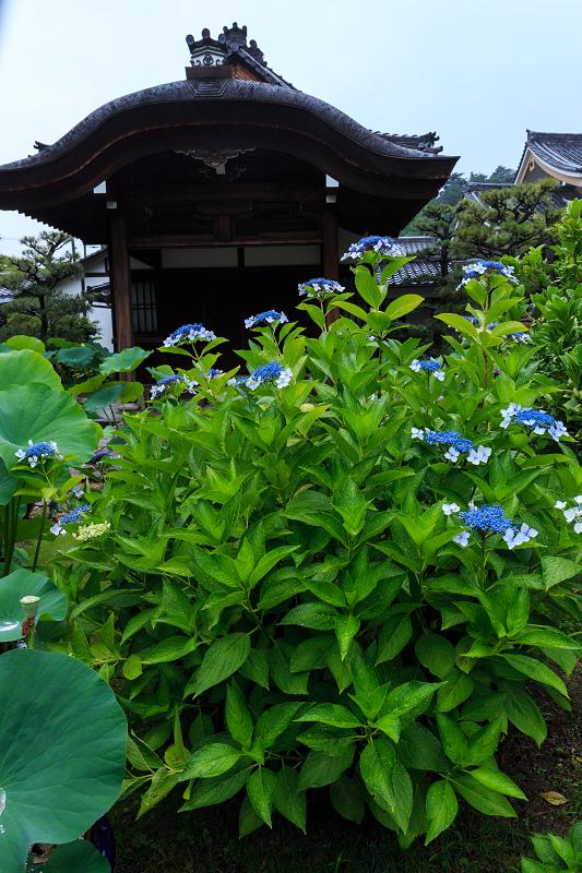 法金剛院・初夏の花々_f0155048_2049163.jpg