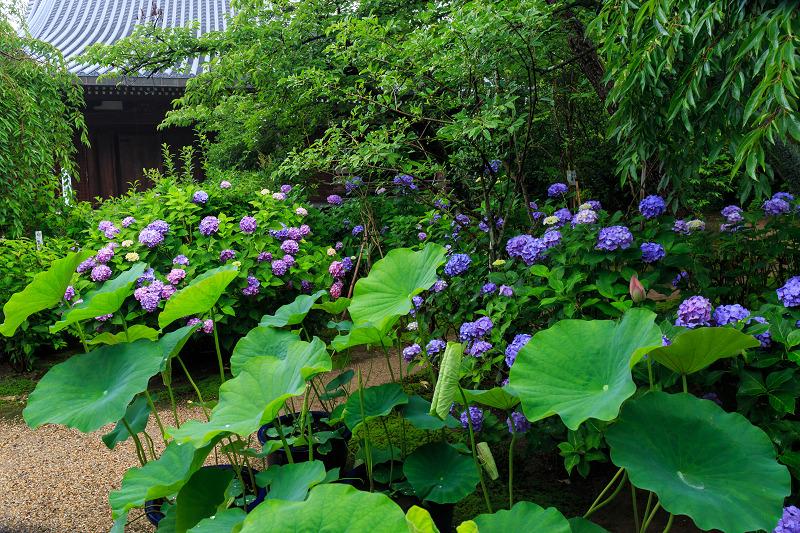 法金剛院・初夏の花々_f0155048_20493563.jpg