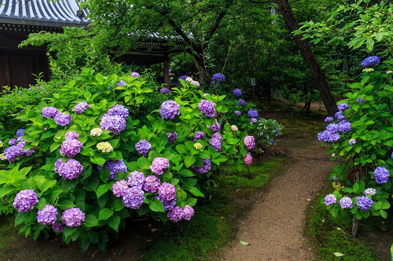 法金剛院・初夏の花々_f0155048_2050111.jpg