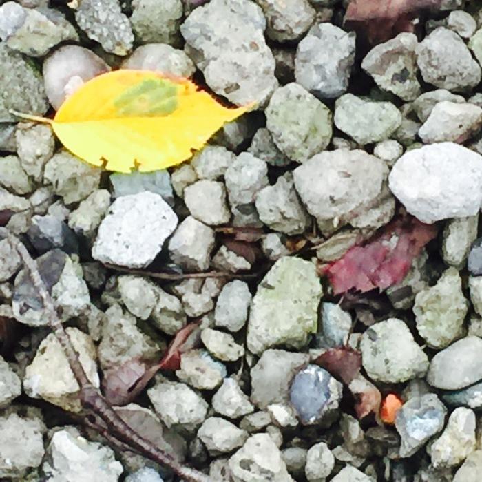 秋の音  秋の色 秋の始まり_d0105967_08294792.jpeg