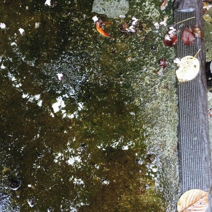 秋の音  秋の色 秋の始まり_d0105967_08302944.jpeg