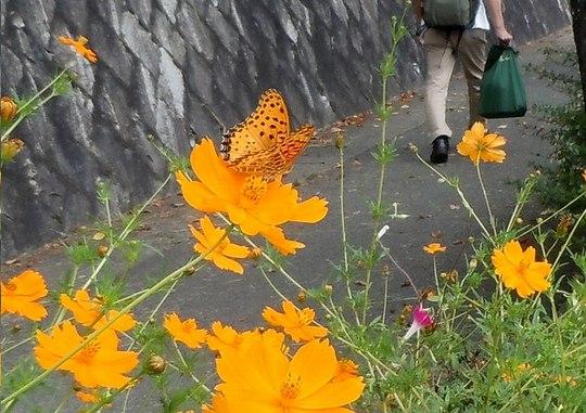 秋のかたち、秋のうた(1)_b0102572_14511766.jpg