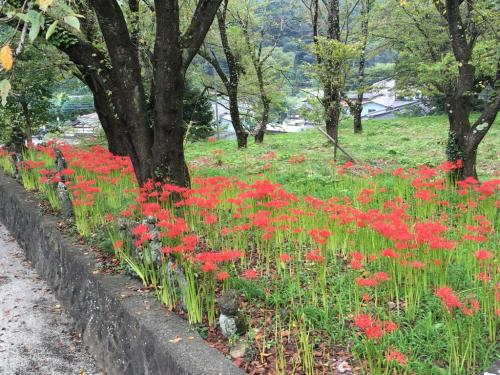 彼岸花が咲き始め、稲刈りもたけなわです。_d0338282_12535118.jpg