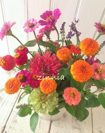 畑のジニア * レッスンのお花を収穫しました♪_b0138802_23562090.jpg