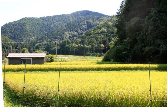 稲刈り_e0048413_208645.jpg