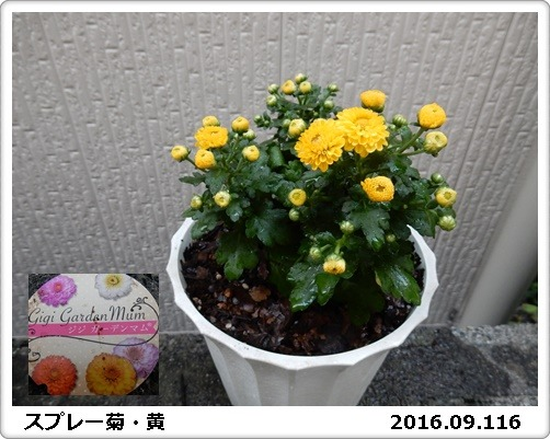e0033229_189449.jpg
